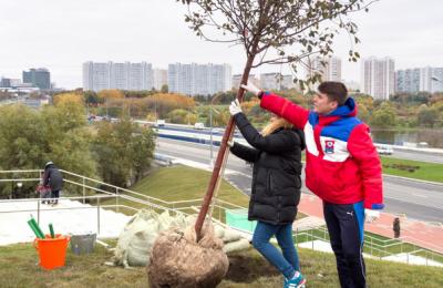 В Москве в этом году высадят более 3 млн деревьев