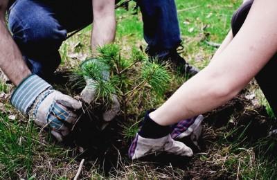 """Растения по программе """"Миллион деревьев"""" высадят в Донском районе"""
