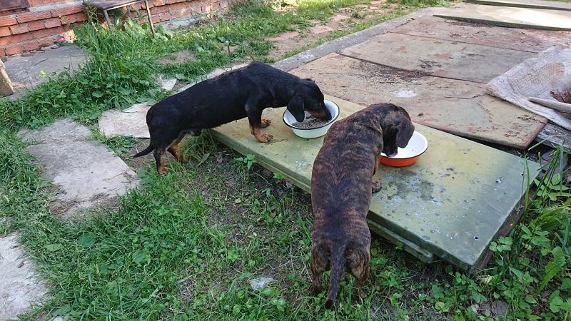 Собаки корм приют волонтеры добровольцы