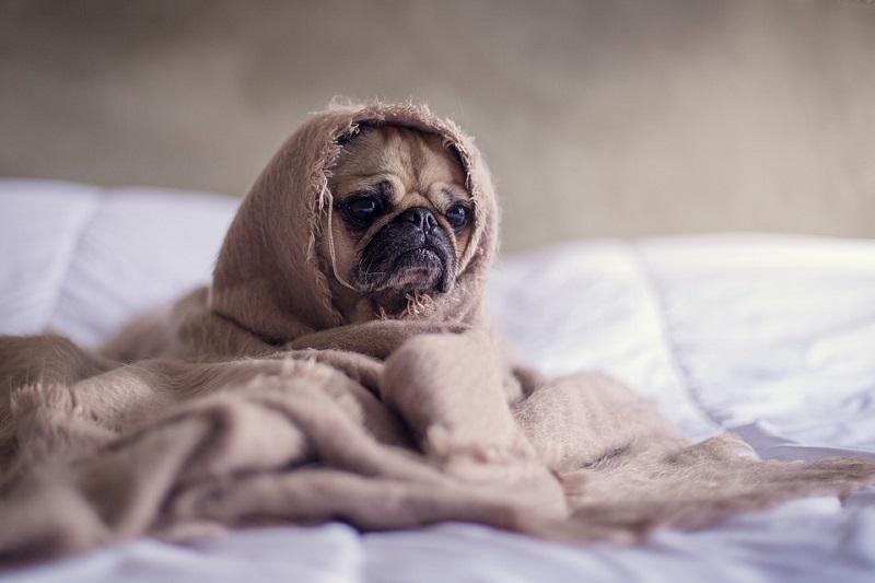 собака ветеринар здоровье животные