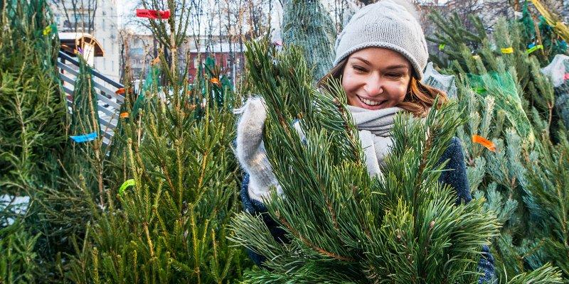 новый год, елочный базар, Мария Торопова,