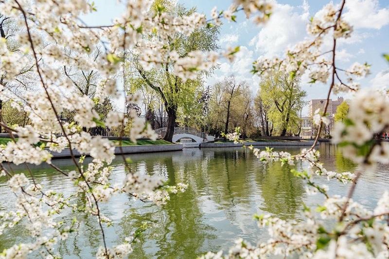 парк горького пруд природа весна